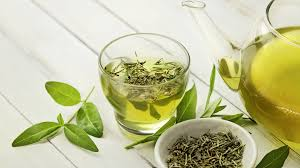 green tea every day