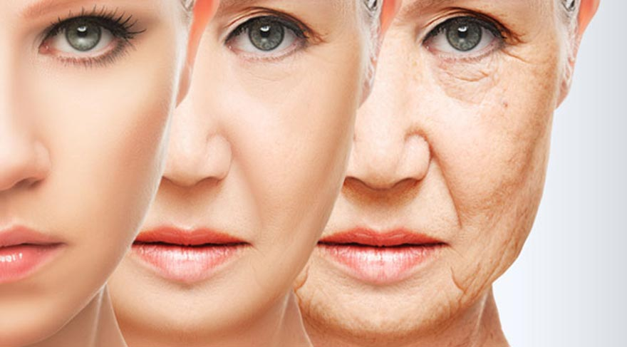 Facts of collagen